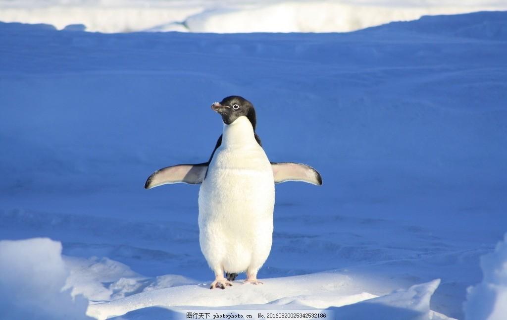 北极企鹅 帝企鹅 可爱企鹅 海洋之舟 冰川 雪地 冰雪 野生动物