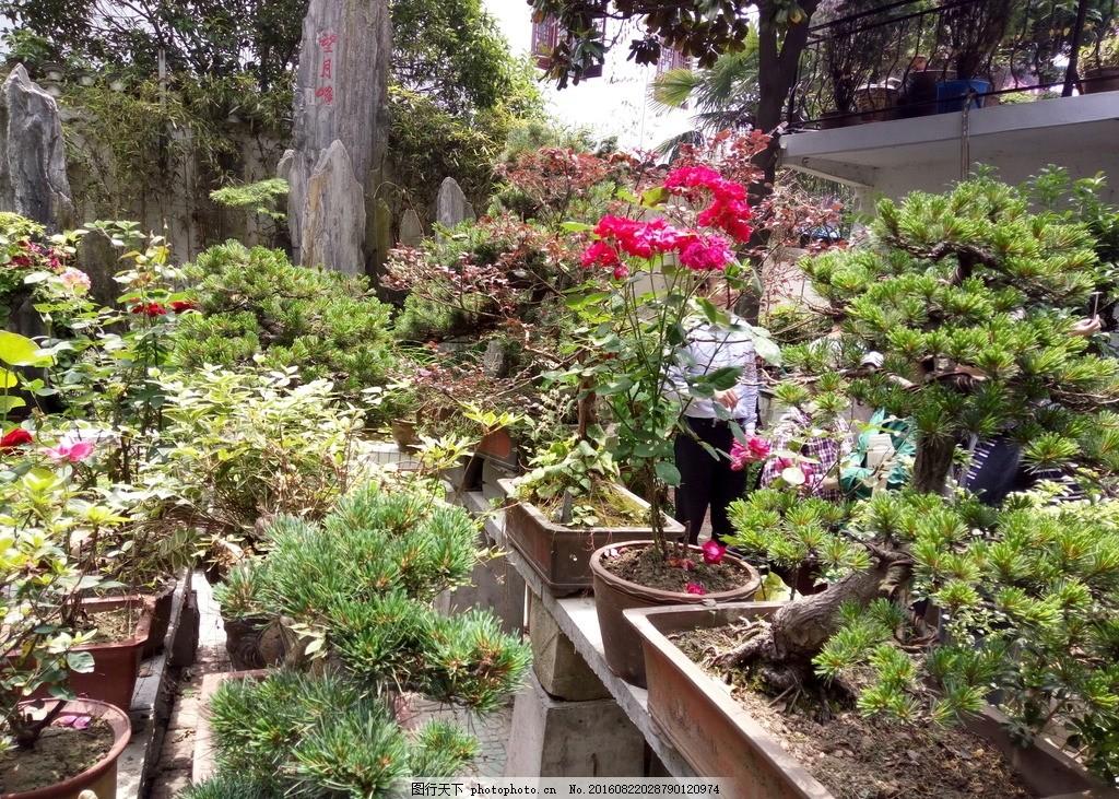 后庭小院 望月 風景 景觀 院子 后院 水池 攝影 建筑園林 園林建筑