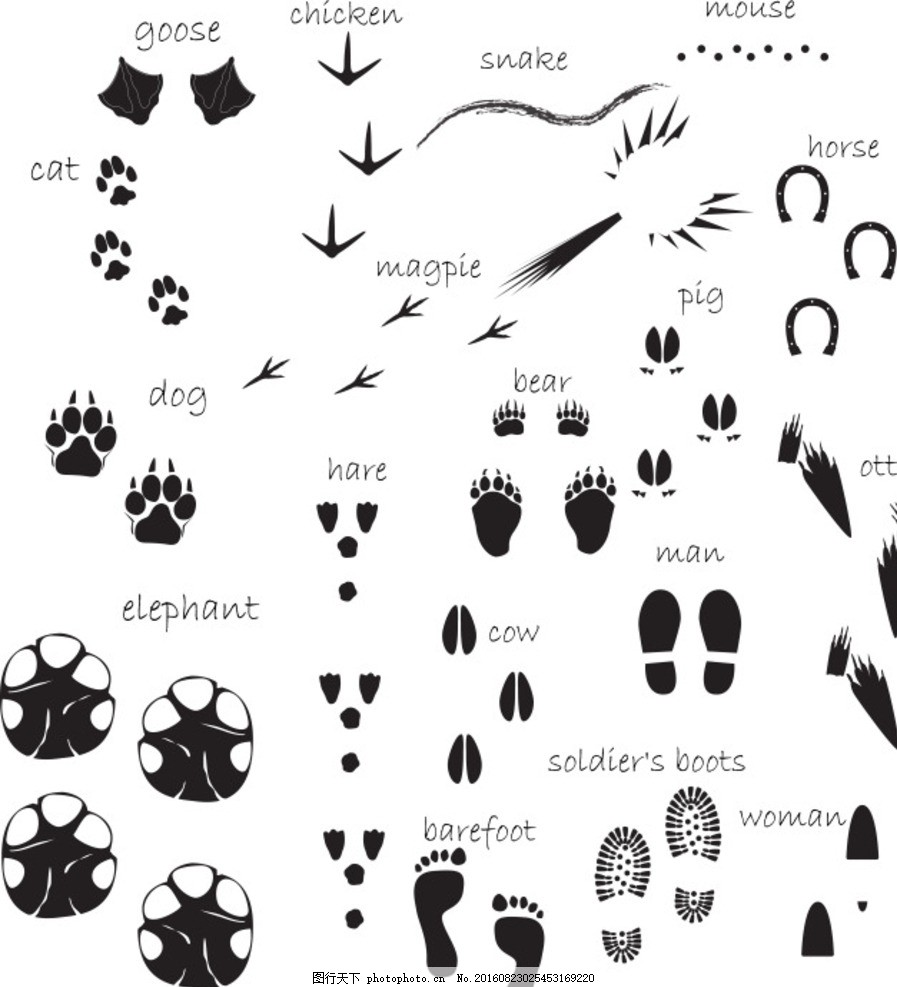 人和动物的各类脚印