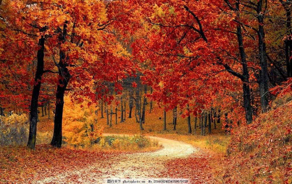枫树林 小路 叶子 森林湖泊图片 森林 树林 林木 树木 秋天 天空 蓝天