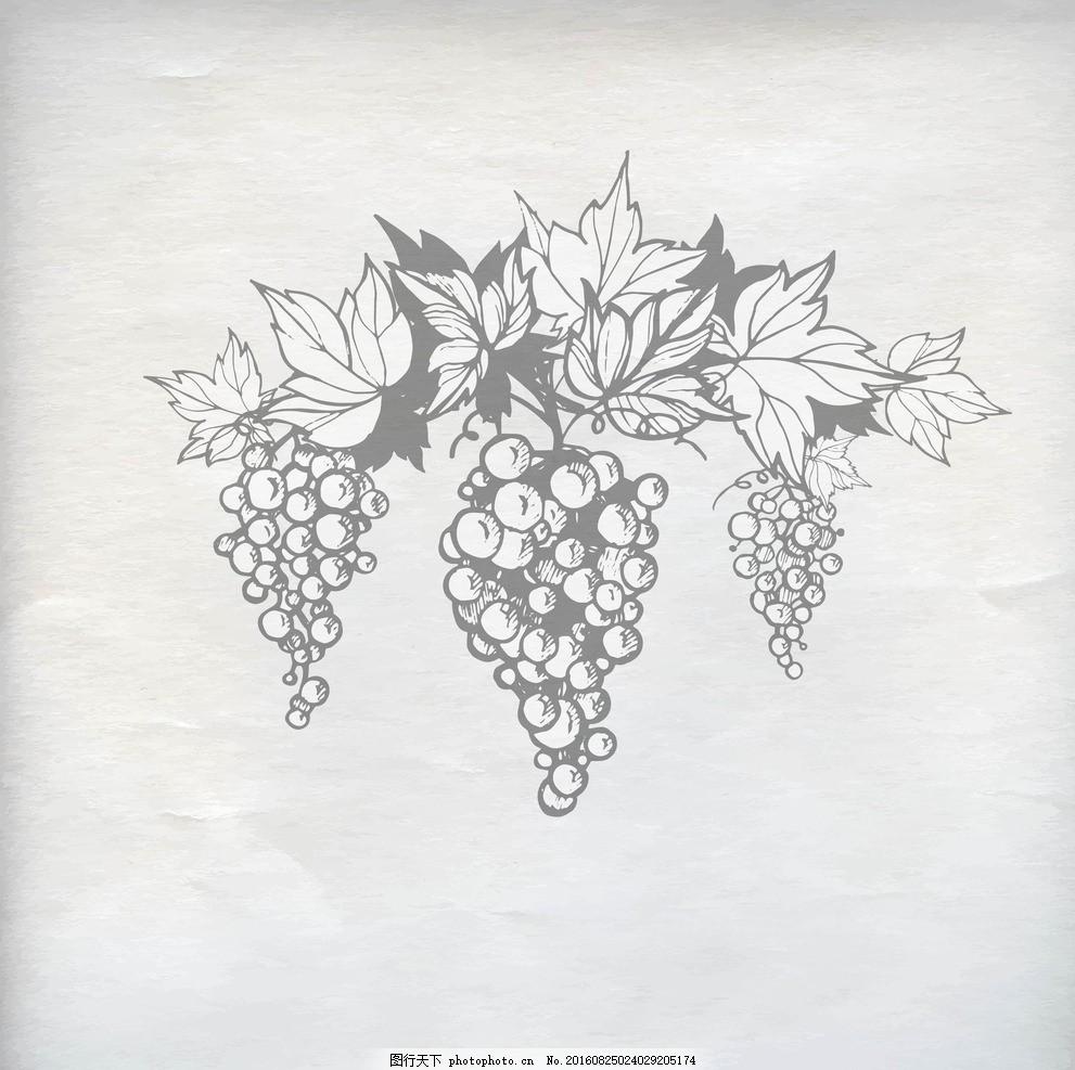 黑白 简约 葡萄藤 手绘 水果 花系列 设计 自然景观 自然风光 ai