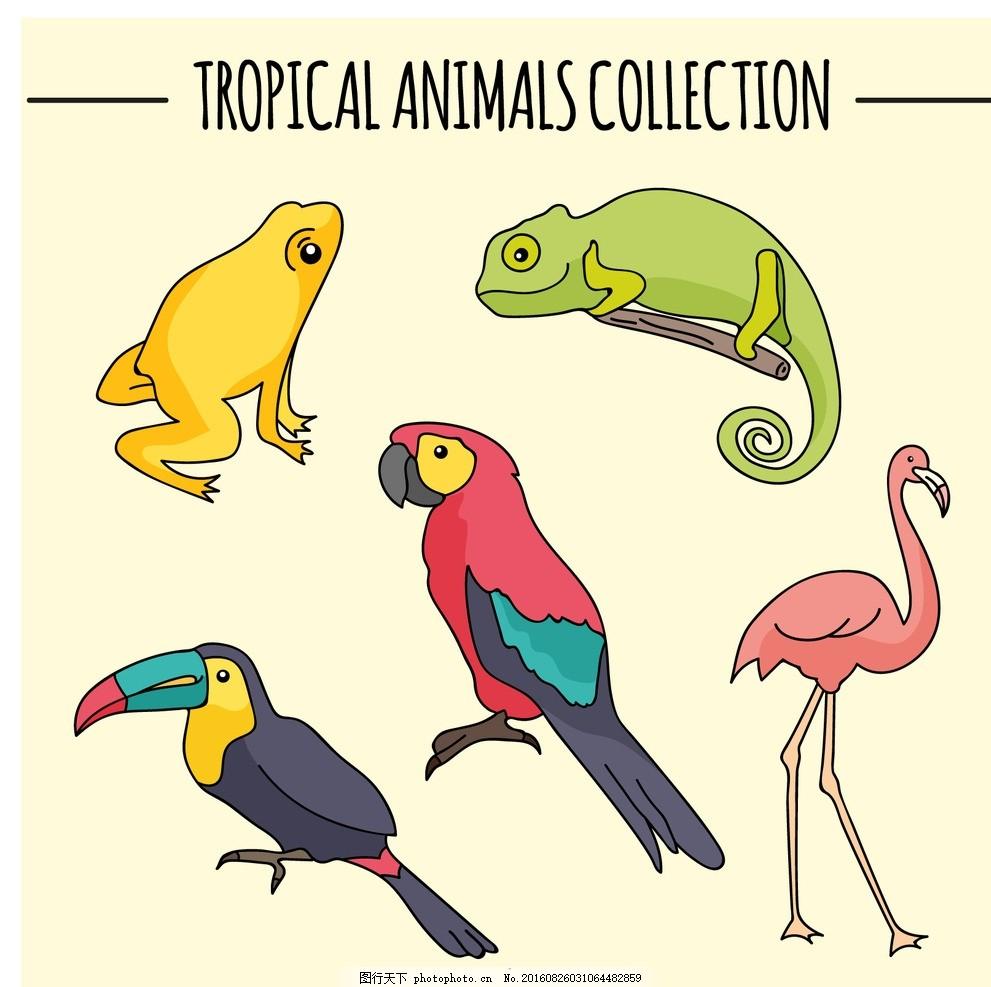 手绘鸟和青蛙 自然 动物 绘制 翅膀 羽毛 丛林 热带 绘画 动物园