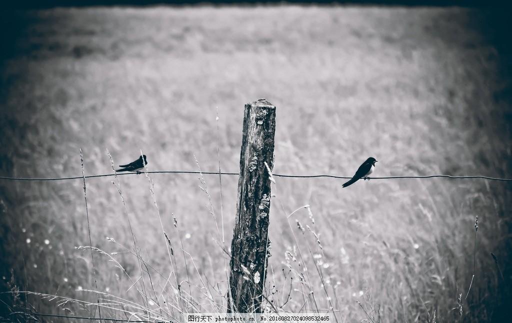 黑白木桩田野