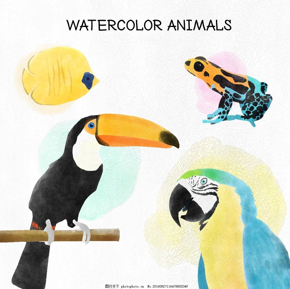 手绘水彩野生动物