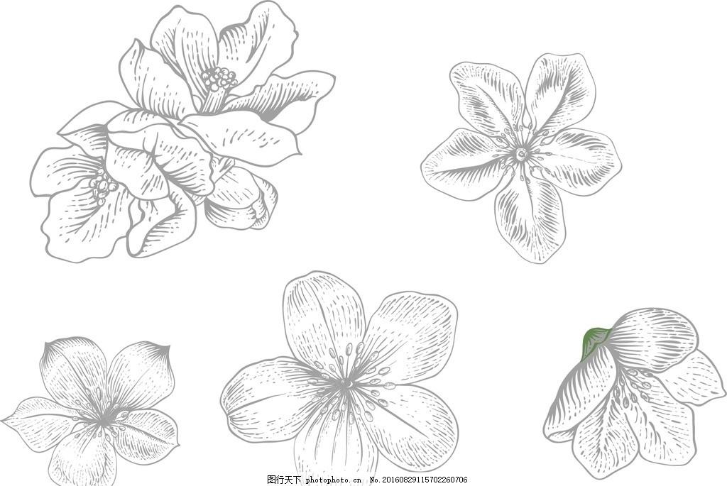 黑白花朵 欧式花朵素材 素描 线条 复古花卉 复古风格 怀旧 植物 插画