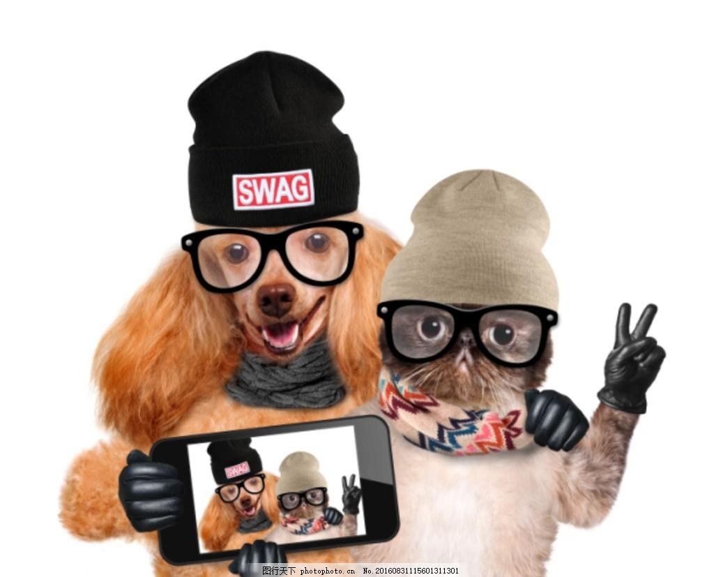 动物拟人 宠物 狗猫 加菲猫 眼镜 手机 拍照 合影 创意 拥抱