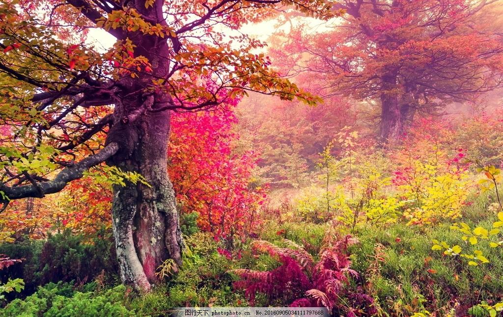 秋天 大树 公园 花草 田野 自然 森林 树林 红叶 金秋 秋季 秋景 落叶