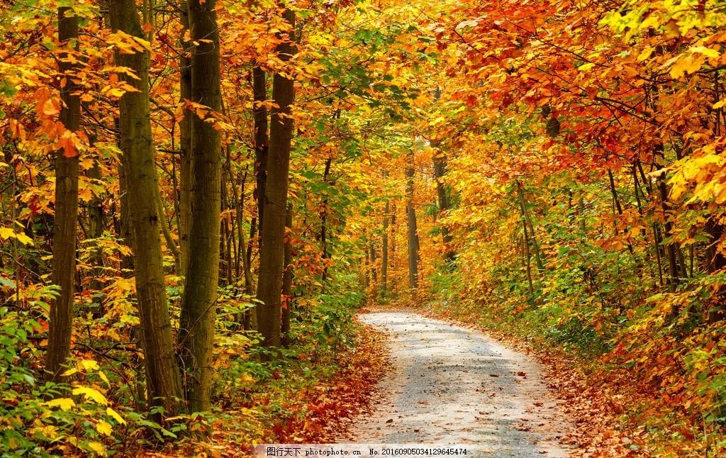 小路 道路 公路 秋天 秋季 黄叶 树林 森林 红叶 落叶 大树 摄影 自然