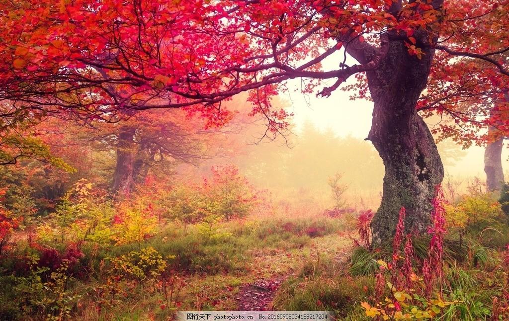 秋天,大树 花草 公园 小路 自然 森林 树林 红叶-图行