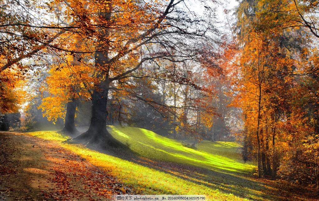 秋天 大树 花草 公园 草地 湖泊 自然 森林 树林 红叶 金秋 秋季 秋景