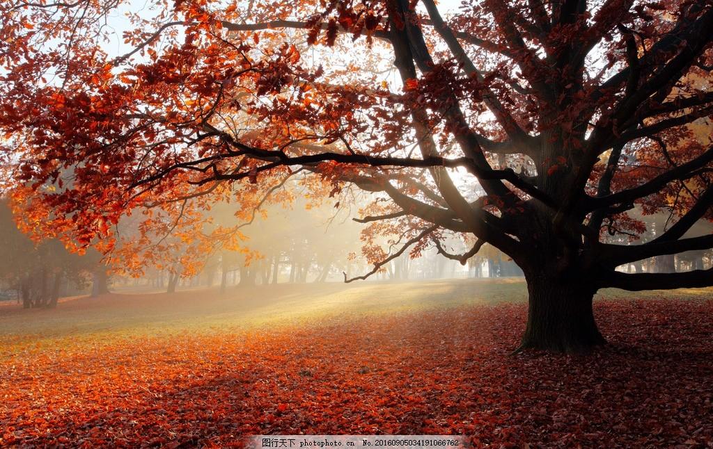 秋天 大树 公园 自然 森林 树林 红叶 金秋 秋季 秋景 落叶 美景 摄影