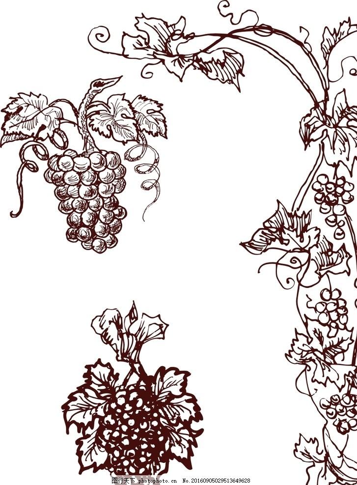 矢量葡萄素材 青葡萄 葡萄矢量图 葡萄树 葡萄叶 葡萄藤 藤蔓 欧式