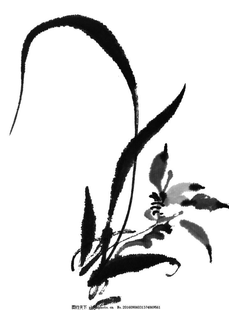 兰花水墨 花卉 菊花 国画 山水画 水墨画 插花 插画 中国风