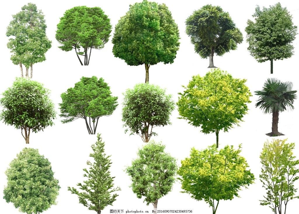 高清 树木 园林 配景 绿化 设计        景观 树 设计 自然景观 建筑