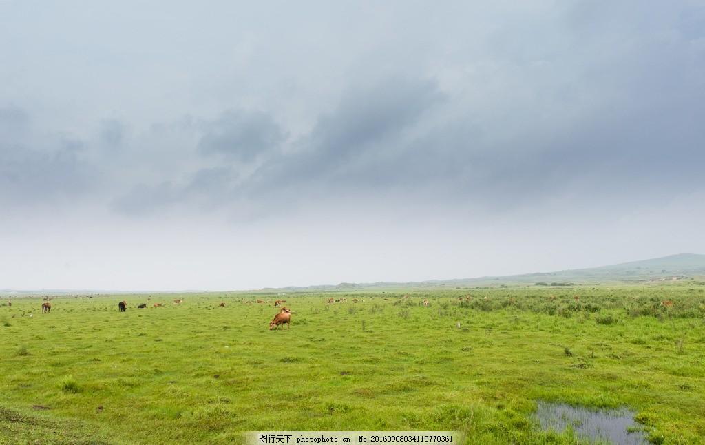 草原风光 内蒙古草原 坝上草原 草地 牛 天苍苍野茫茫 内蒙古风景