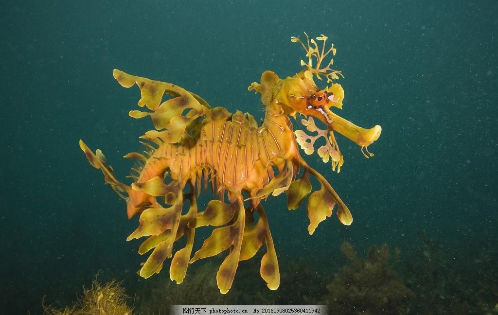 海洋王国 珊瑚 哺乳动物 蓝色海洋 海洋 摄影 大自然美景 摄影 生物