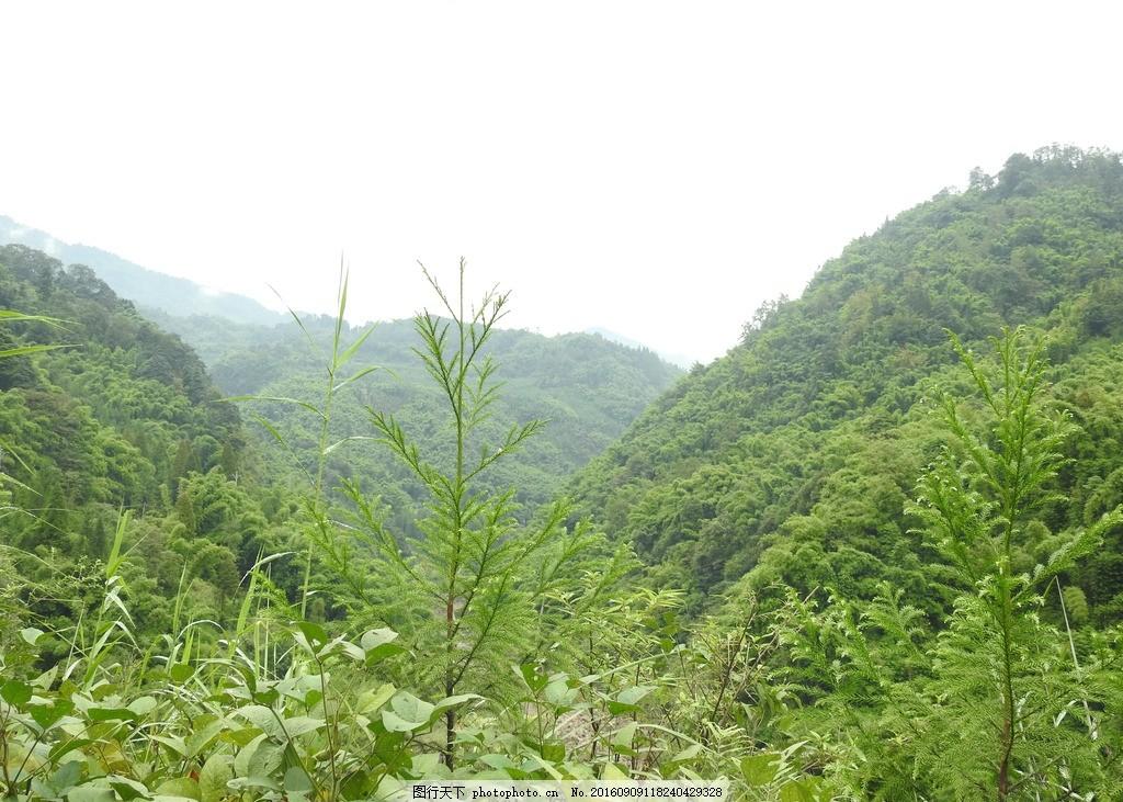 山林 山 望鱼山峰 雅安望鱼 青山 山水 摄影 自然景观 山水风景 300dp