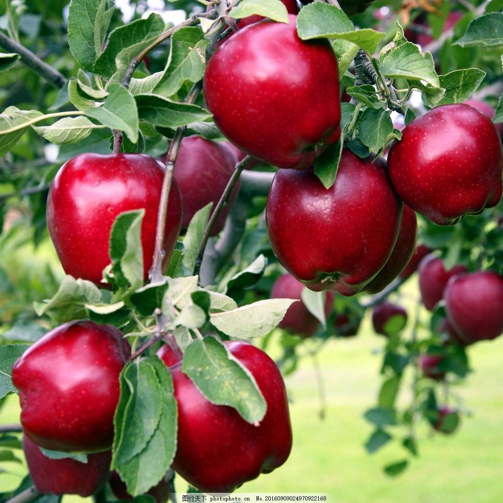 苹果a1337电路图