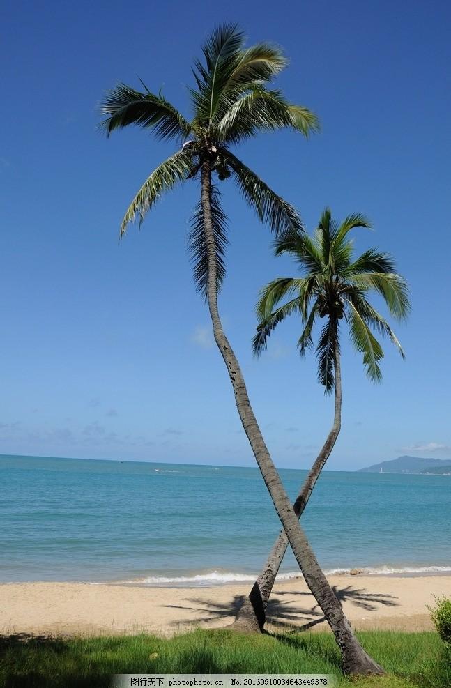 海南情侣树 三亚 大海 椰子树 摄影