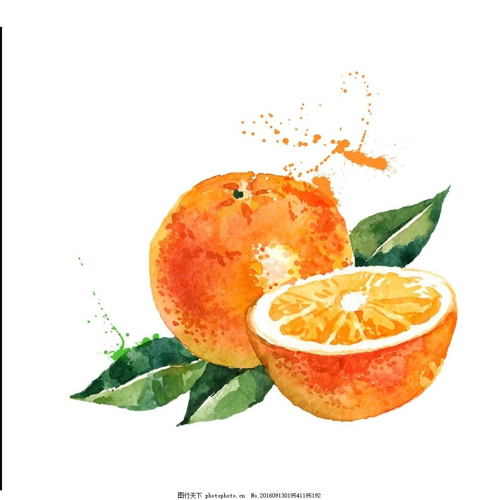 手绘水彩橙子桔子矢量插画