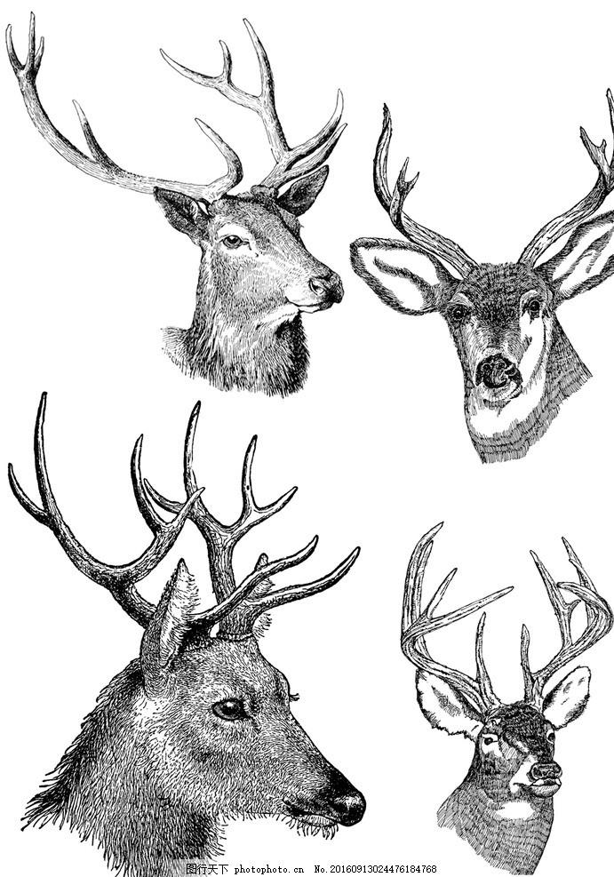 四个精美的鹿头