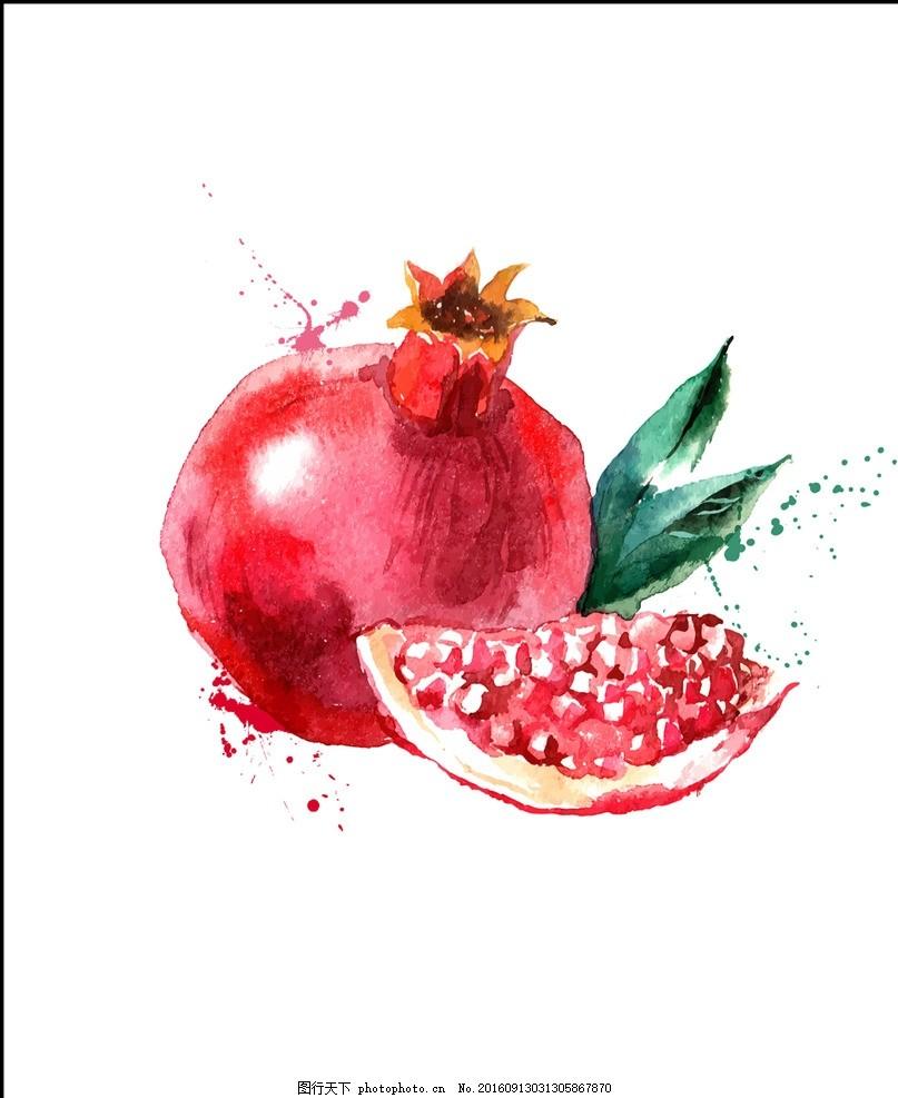 手绘石榴水果水彩画