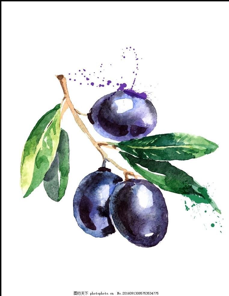 手绘水彩橄榄水果矢量插画,橄榄枝 和平 橄榄果实 -图