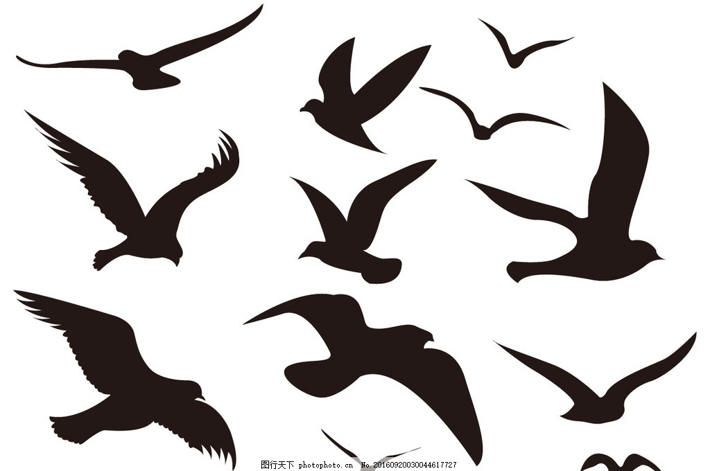 海鸟剪影 海鸥 海鸟 小鸟 鸟剪影 动物剪影 飞行动物剪影 鸟 鸟类