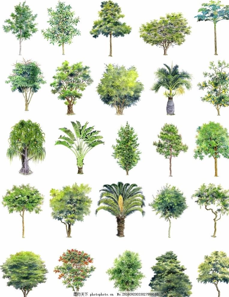 手绘园林景观树木立面效果图素材 景观设计 绿化 乔木