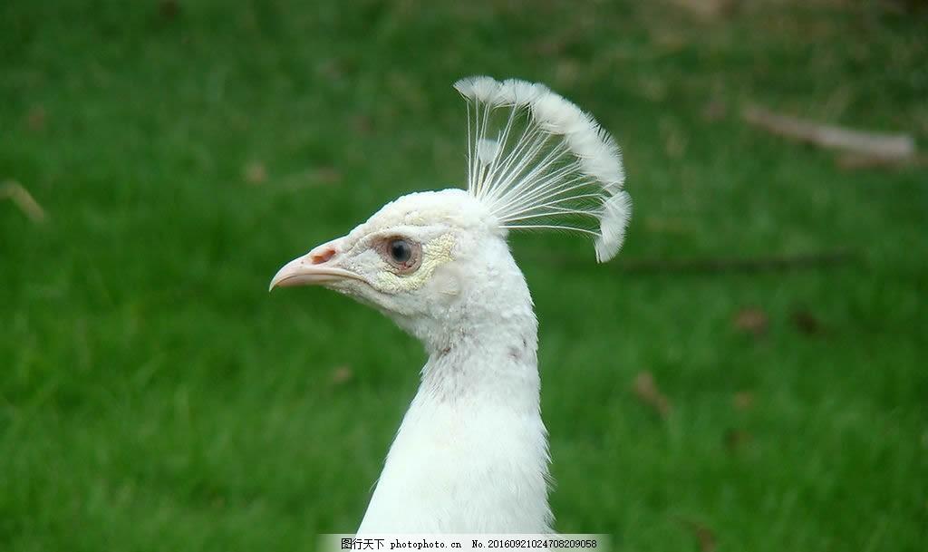 壁纸 动物 鸟 摄影 桌面 1024_609