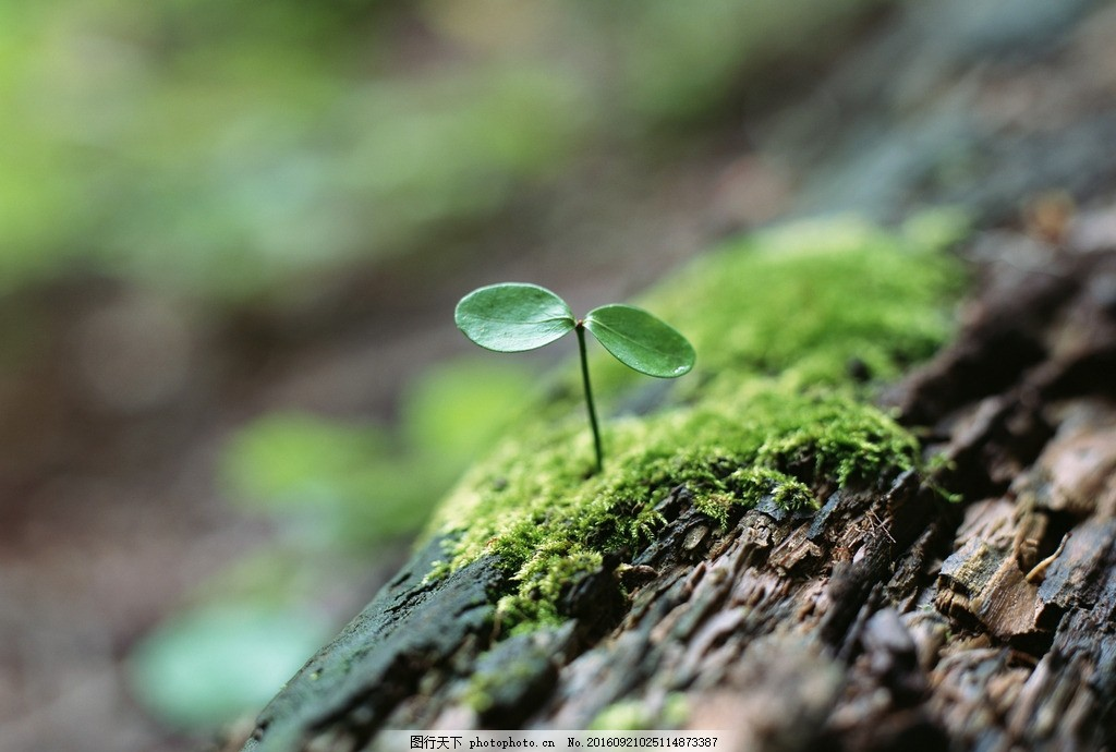 种子发芽 叶片 萌芽 植物 植被 苔藓 树皮 摄影 花草植物树木