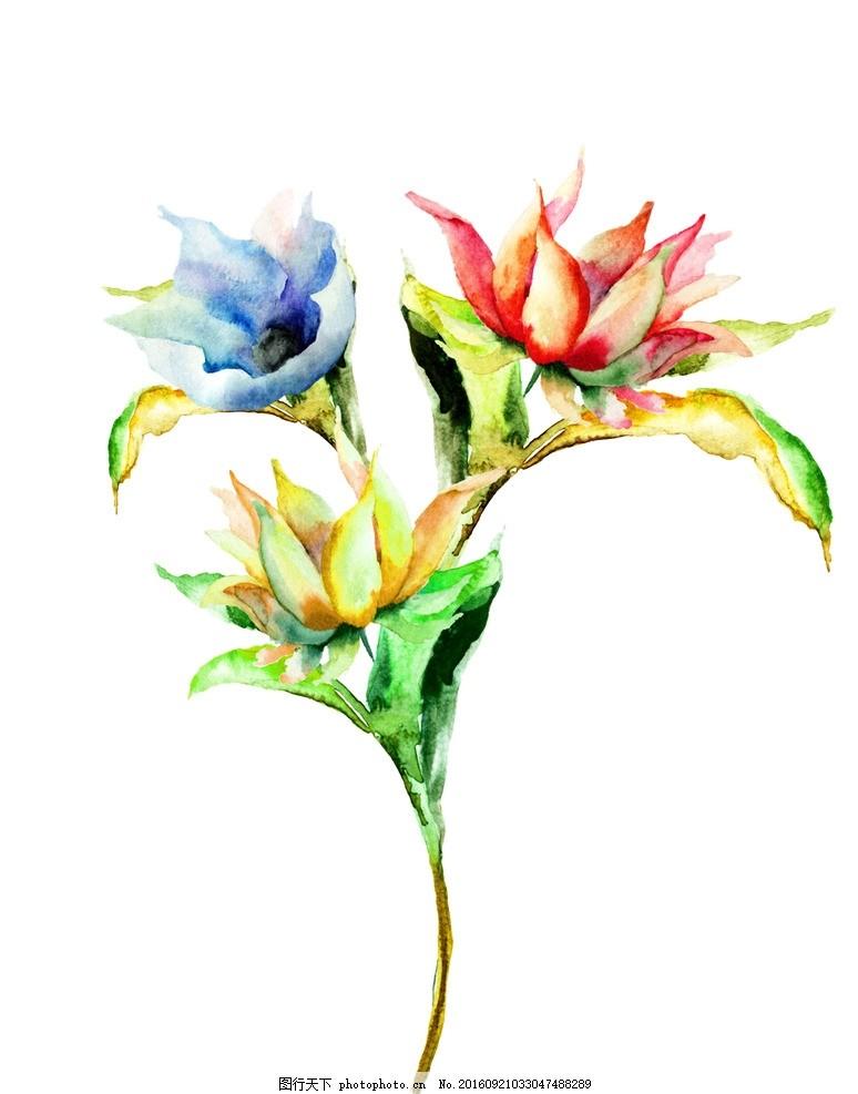 三朵水粉花 水彩画 鲜花 水彩花 花朵 花卉 彩绘花卉 水粉花 水墨花