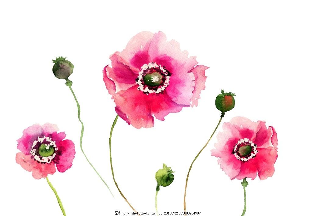 花朵 花卉 彩绘花卉 水粉花 水墨花 手绘花卉 彩色花 水粉画 水彩花卉