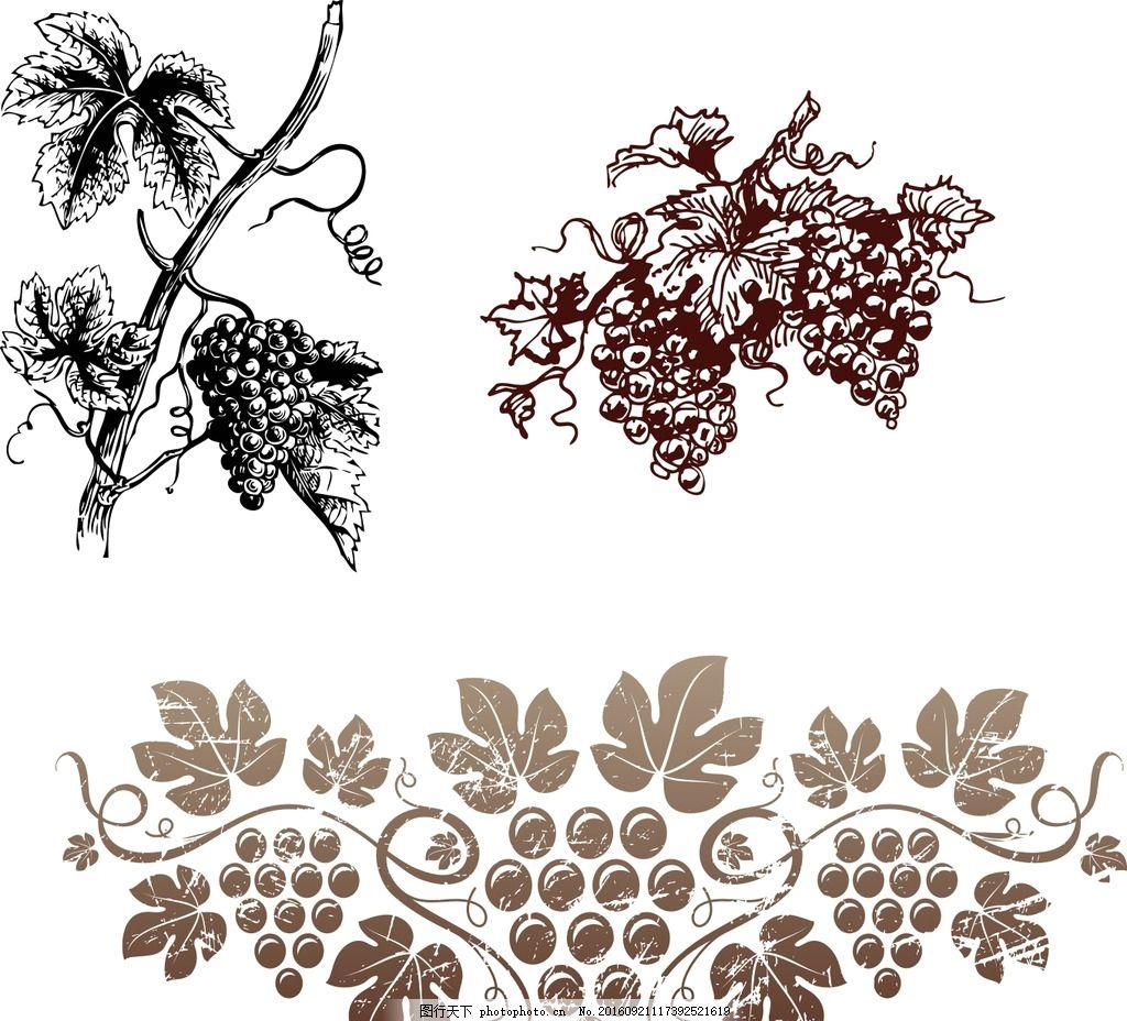 葡萄藤 葡萄矢量素材 葡萄藤素材 手绘素材 卡通素材 欧式葡萄藤