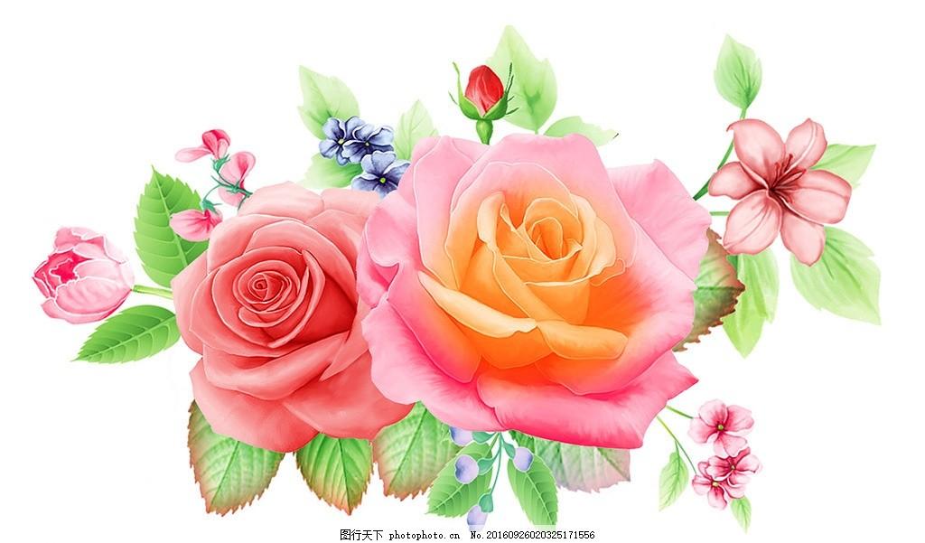 玫瑰 玫瑰花 红玫瑰 粉玫瑰 手绘玫瑰 手绘花朵 花朵 花卉 牡丹 牡丹