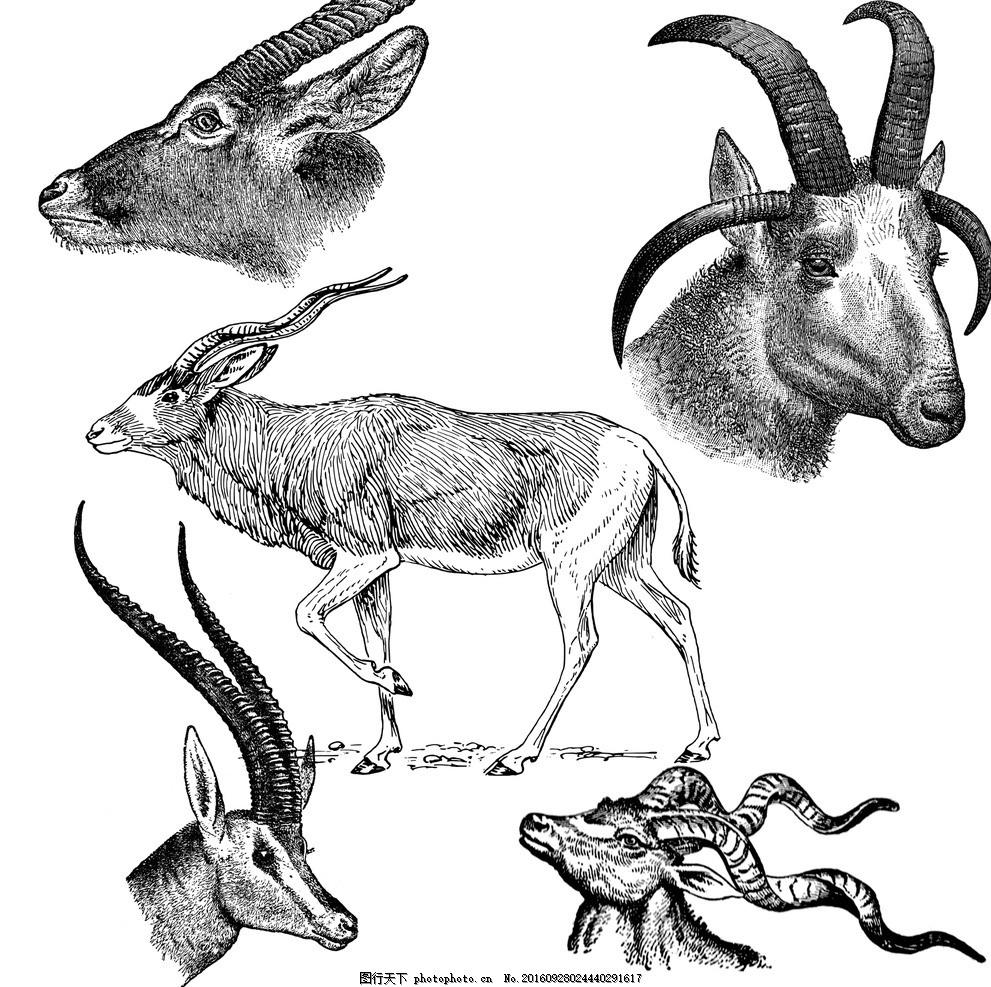 设计图库 生物世界 野生动物    上传: 2016-9-28 大小: 35.