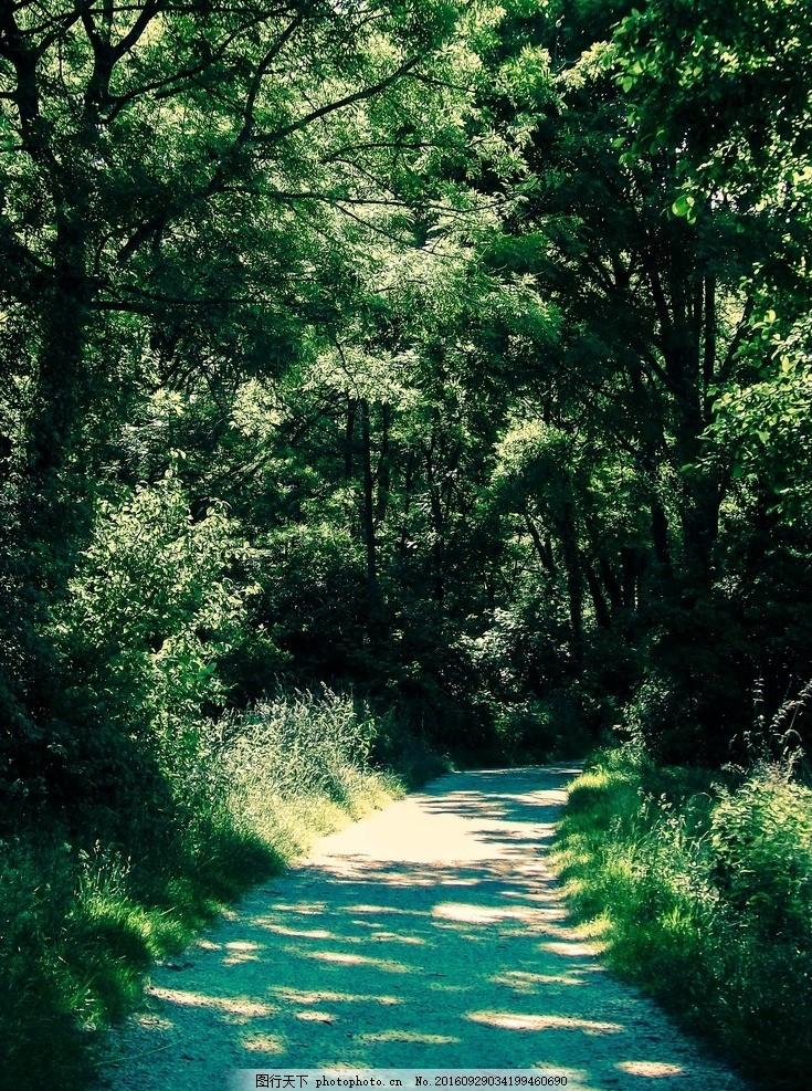 绿色 树 森林 光 太阳 景观 心情 树木 树林 摄影 自然景观 自然风景