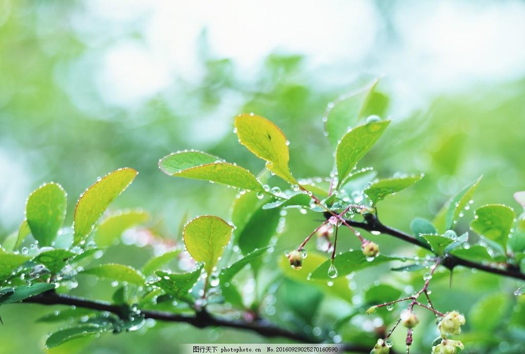 树叶 绿叶 叶子 叶片 树枝 树干 树木树叶 摄影 素材 花草植物树木 摄
