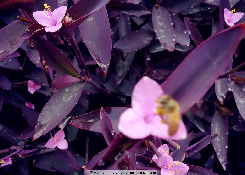 彩铅画紫罗兰教程步骤图